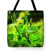 2629- Comsrock Winery Tote Bag