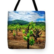 2638- Coffaro Vineyard Tote Bag