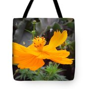 Australia - Yellow Cosmos Carpet Flower Tote Bag