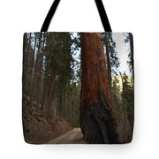 Giant Sequoia Trees Tote Bag