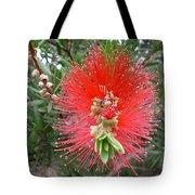 Australia - Callistemon Red Flower Tote Bag