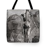 18th Century Anatomical Engraving Tote Bag