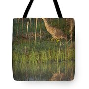 American Bittern Along The Shore Tote Bag