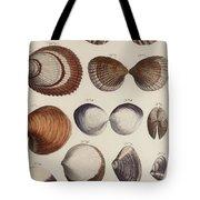 Aquatic Animals - Seafood - Shells - Mussels Tote Bag