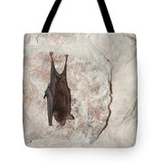 Bats Inside The Pyramid At Grupo Nohoch Mul At The Coba Ruins  Tote Bag