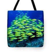 Bluestripe Snapper Tote Bag