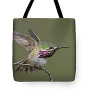 Calliope Hummingbird Tote Bag