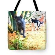 3 Cat Attack Tote Bag