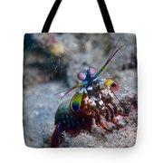 Close-up View Of A Mantis Shrimp, Papua Tote Bag