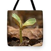 Coffee Seedling Tote Bag