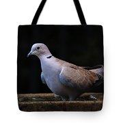 Collared Dove Tote Bag