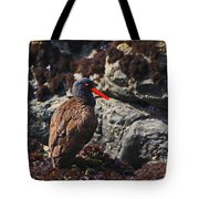 Black Oystercatcher Tote Bag