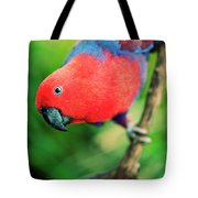 Crimson Rosella Tote Bag