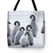 Emperor Penguin Chicks Tote Bag