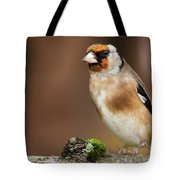 European Goldfinch Bird Close Up   Tote Bag