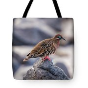 Galapagos Dove In Espanola Island. Tote Bag