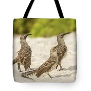 Galapagos Hood Mockingbird Tote Bag
