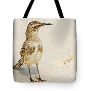 Galapagos Hood Mockingbirds Tote Bag