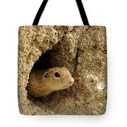 Goround Squirrel  Tote Bag