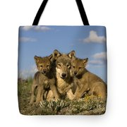 Gray Wolf And Cubs Tote Bag