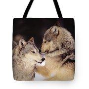 Gray Wolves Tote Bag