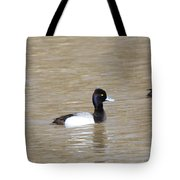 3 Greater Scaup  4060 Tote Bag
