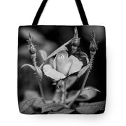 Knockout Roses Painted Bw Tote Bag