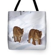 Lions Tote Bag