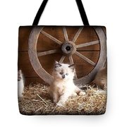 3 Little Kittens With The Wagon Wheel. Tote Bag