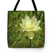 Lotus Flower In Bloom  Tote Bag