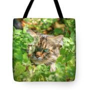 Maine Coon Tote Bag