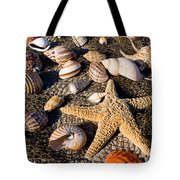 Mix Group Of Seashells Tote Bag