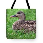 New Zealand - Female Mallard Duck Tote Bag