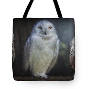3 Owls On A Branch Tote Bag