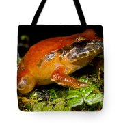 Rosy Ground Frog Tote Bag