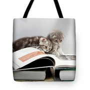 Scottish Fold Cats Tote Bag by Evgeniy Lankin