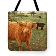 Scottish Highlander With Big Bangs Tote Bag