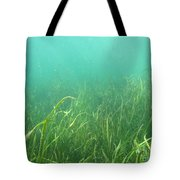 Shallow Freshwater Lake Tote Bag