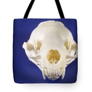 Skull Of A River Otter Tote Bag