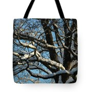 Snowy Trees Against A Blue Sky Tote Bag