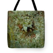 Squat Anemone Shrimp Tote Bag