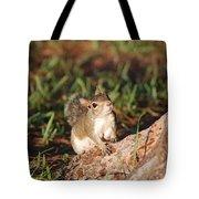 3- Squirrel Tote Bag