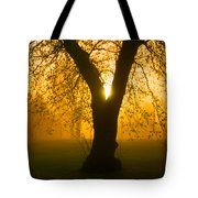 Sunrise Trees Fog Tote Bag