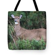 White Tailed Deer Calverton New York Tote Bag