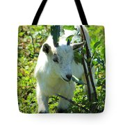 Young Goat On A Farm Tote Bag