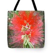 Australia - Red Callistemon Flower Tote Bag
