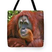 31- Orangutan Tote Bag