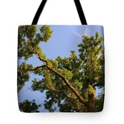 3256 Photography Forest Scene  Tote Bag