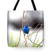 3553-015 - Indigo Bunting Tote Bag