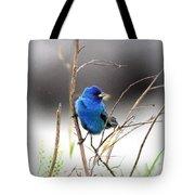 3554-027 -indigo Bunting Tote Bag